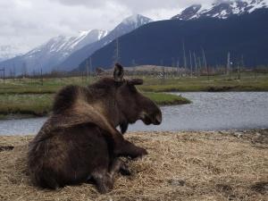 Alaska 2011 Marla's pics 292